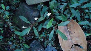 Blue-and-Greenexifremover.com+(5).jpg