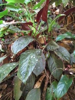 Kalimantan+%26+Sarawak+May+2011+583.jpg